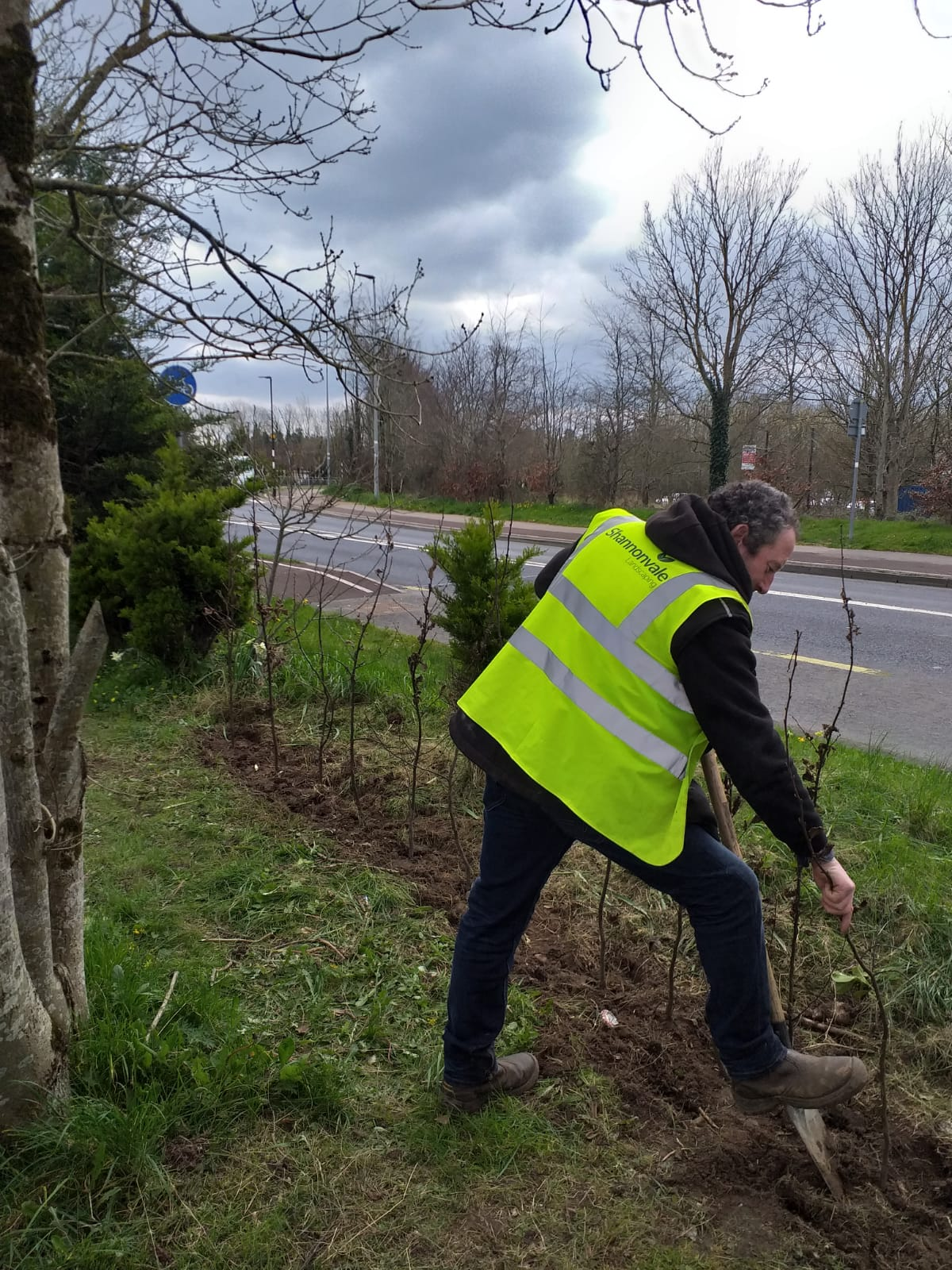 Whip Planting - Limerick COCO